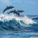 Les requins ont peur des dauphins
